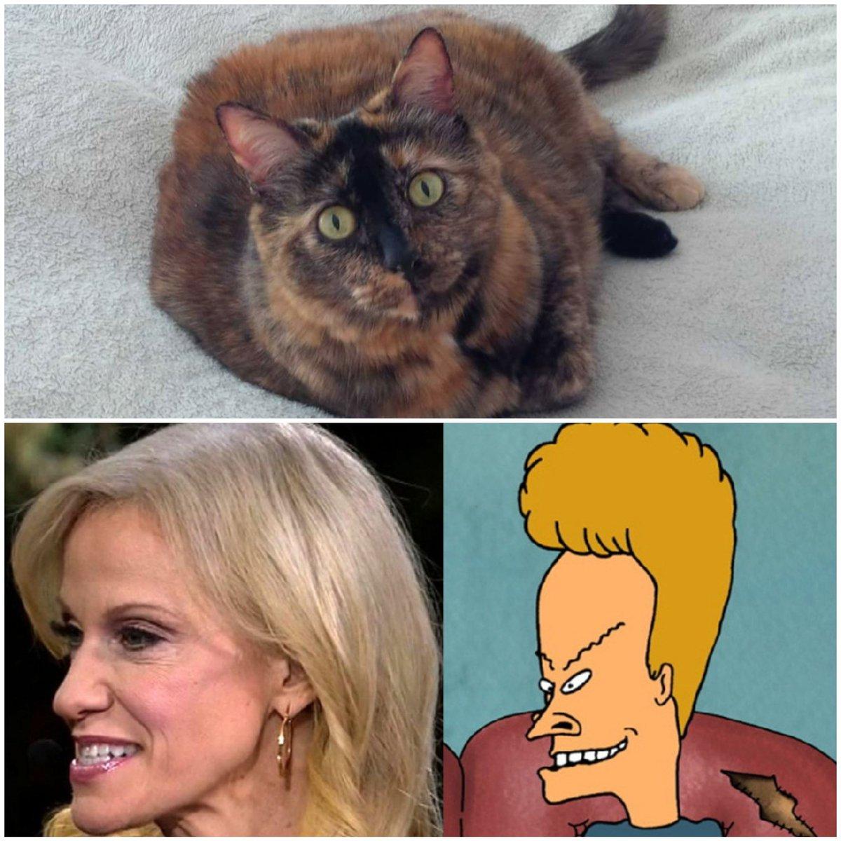 @BitchestheCat this cat also thinks Kellyanne sucks and looks likes Beavis #Catsjudgingkellyanne