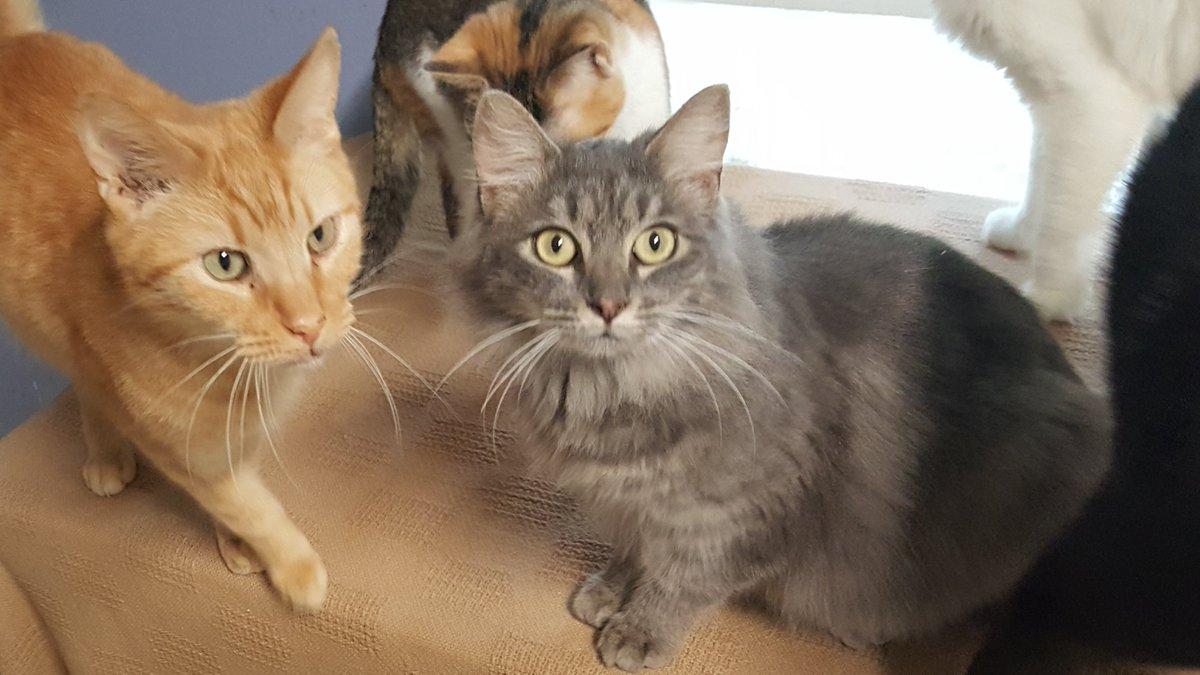 Cinnamon and Apollo are still in shock.   #catsjudgingkellyanne