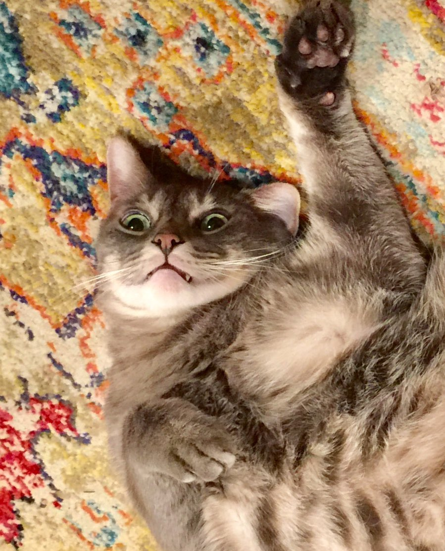 My cat is not only not impressed, he's completely disgusted. #catsjudgingkellyanne