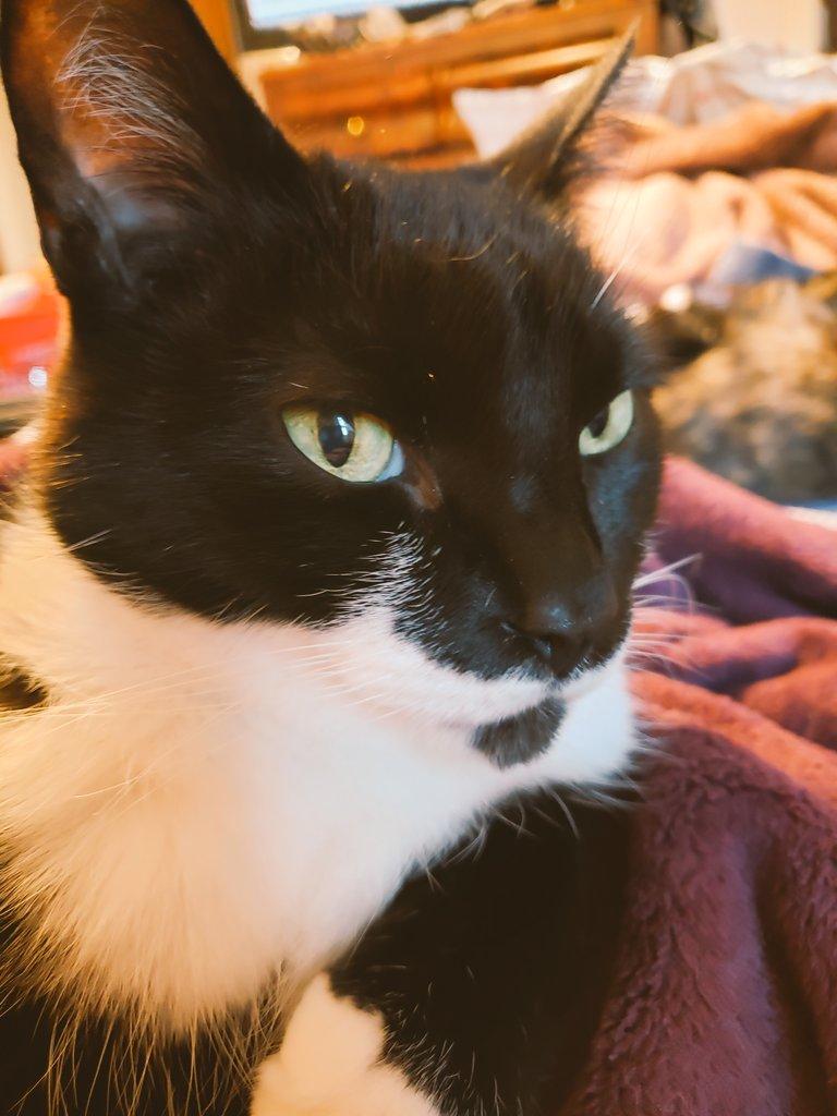 Mao after living through the last 4 years. #Catsjudgingkellyanne