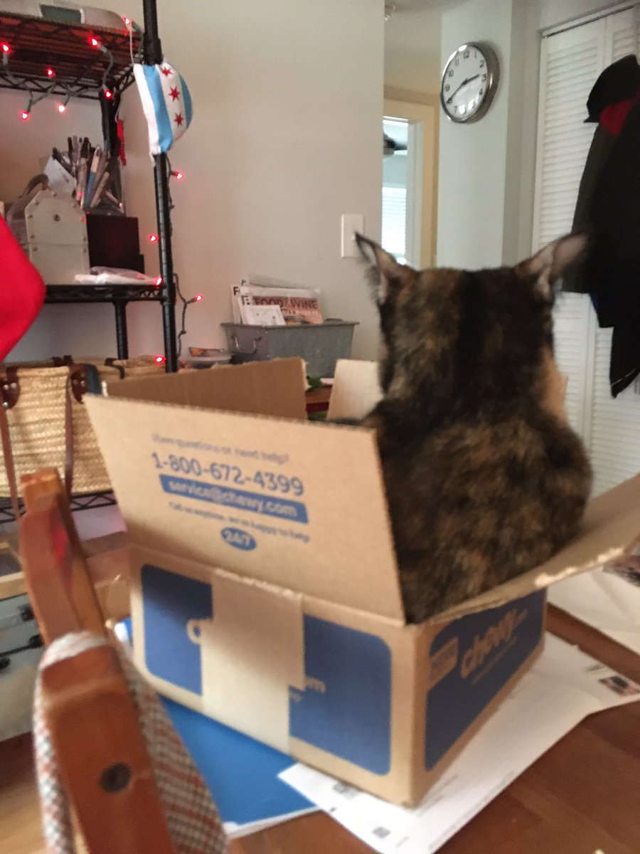 Giiiirl, please. I don't even wanna hear it. #catsjudgingkellyanne