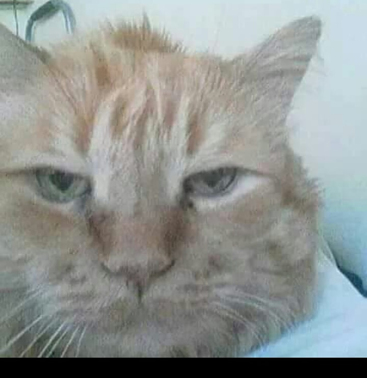 #catsjudgingkellyanne Fernando Elvis is not amused with her silly rhetoric and jail time he thinks would benefit her.