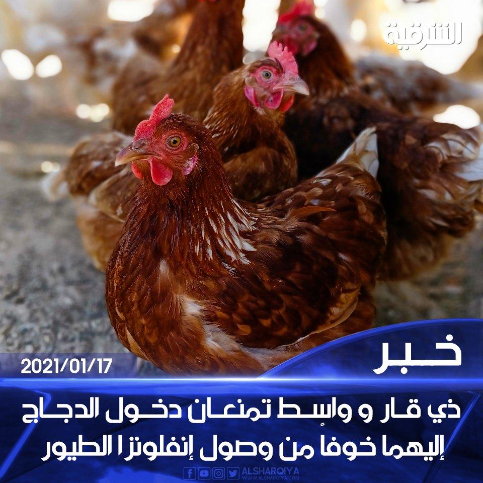 #ذي_قار و #واسط تمنعان دخول الدجاج القادم إليهما من المحافظات الأخرى خوفاً من وصول #انفلونزا_الطيور  #الشرقية_نيوز