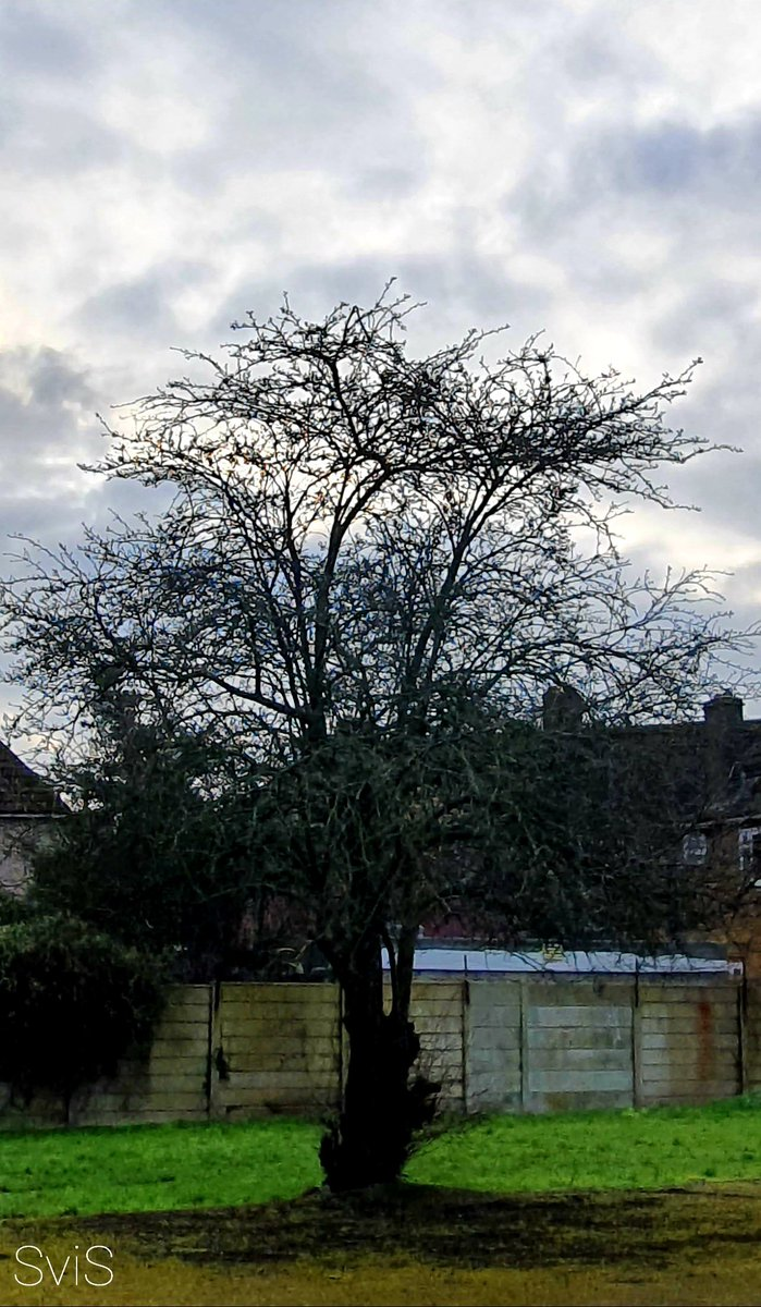 Sunday (click inside) I'm a lone tree in a lone space Thank you for visiting and making me feel special You see beauty in my bare bones and unusual base You see my soul Have a blessed Sunday SviS #trees #beautifulnature #poetry #nature #sundaymood #sundayvibes #love #peace