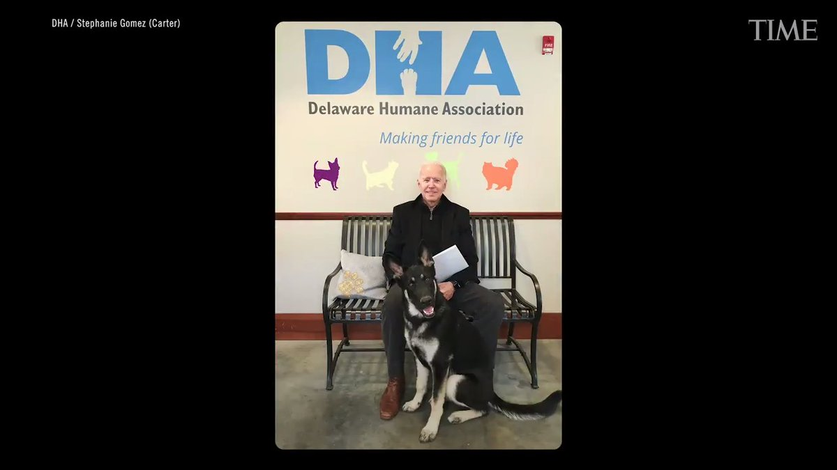 """Ahead of the inauguration, Major Biden, the soon-to-be first pet, will be """"indogurated"""" courtesy of the Delaware Humane Association — the shelter President-elect Joe Biden got him from.  Read more about TIME's first-ever Pet of the Year—rescue animals:"""