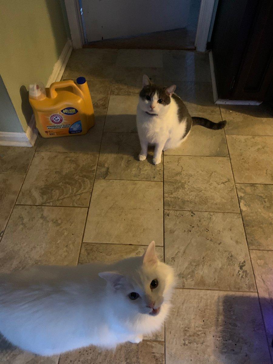Booker and Jon Snow tag team for the shaming. #catsjudgingkellyanne