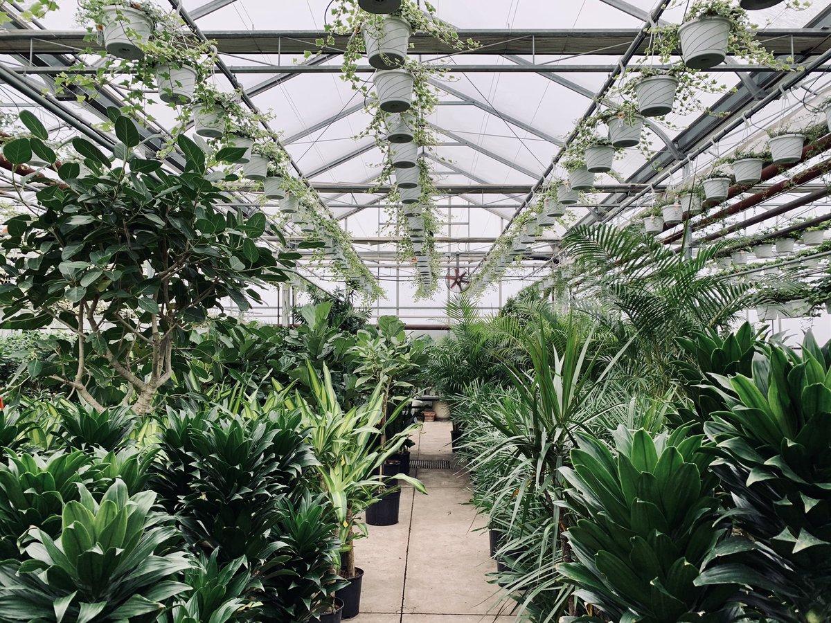 Hello Sunday 🪴 #greenhouseviews #tropicalvibes #50shadesofgreen #takeadeepbreath #sundayvibes #plantlove #plantsmakepeoplehappy #plantscandothat