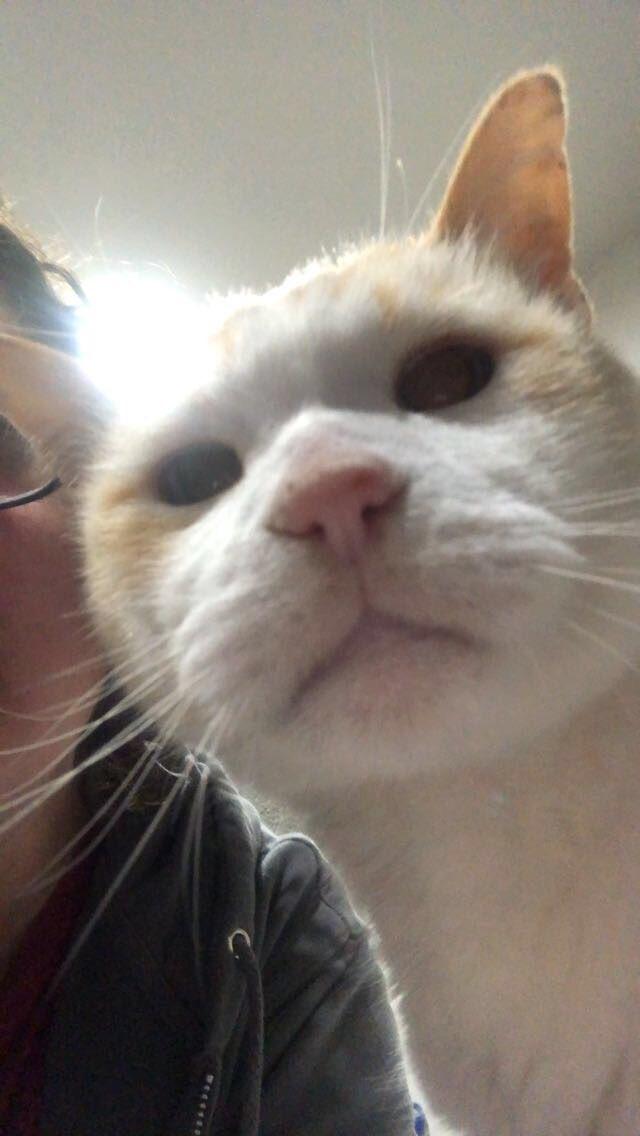 Bob wants to know how you sleep at night #catsjudgingkellyanne