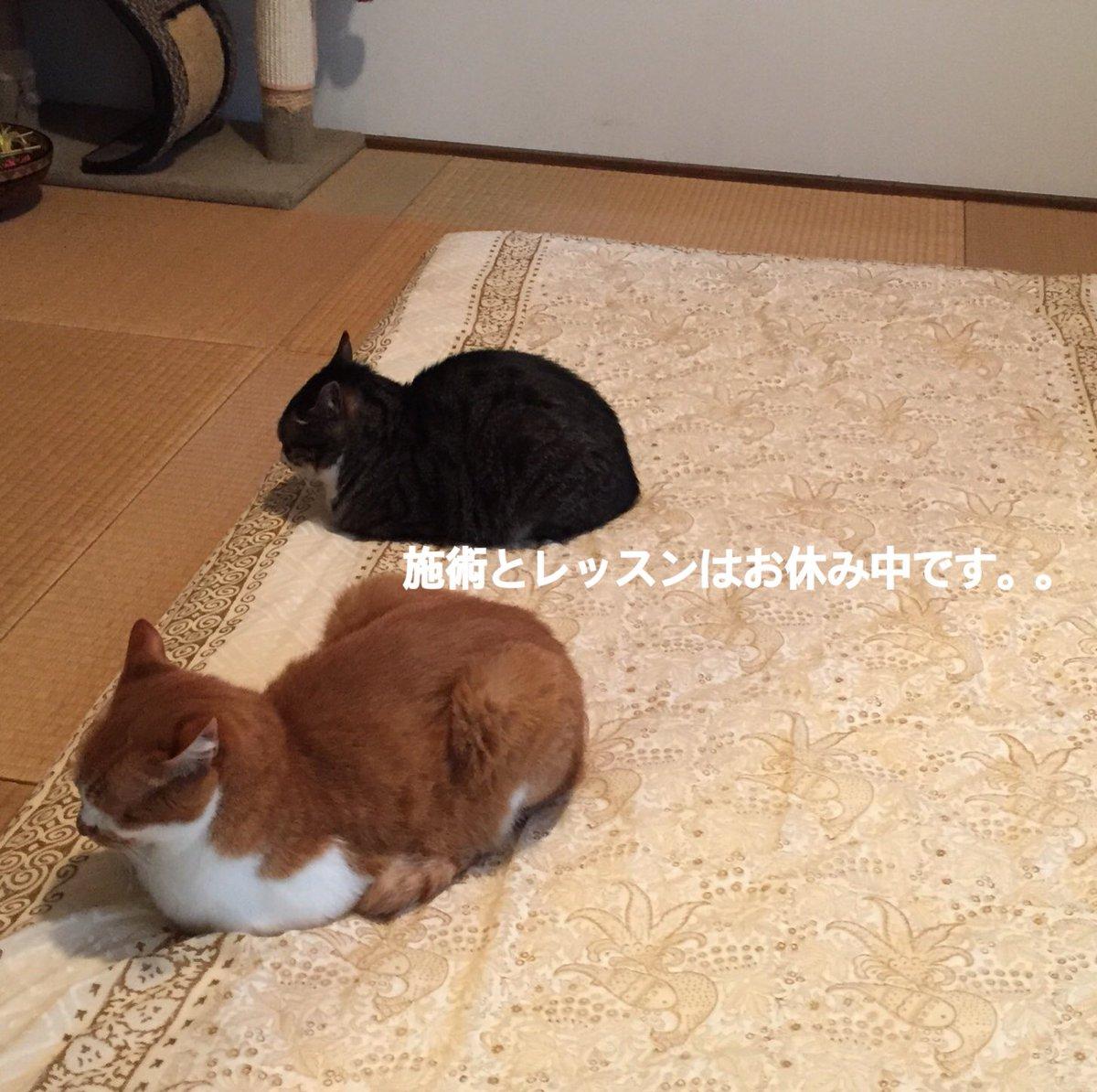 【お知らせ】  お知らせが遅くなりましたが、栃木県にも緊急事態宣言が出たこともあり、現在は、施術&レッスン共にお休みをさせていただいておりますm(_ _)m  お問い合わせやご予約の連絡もいただきありがとうございます。そして今頃のお知らせ申し訳ございません。。 https://t.co/DWhUCpr6aM