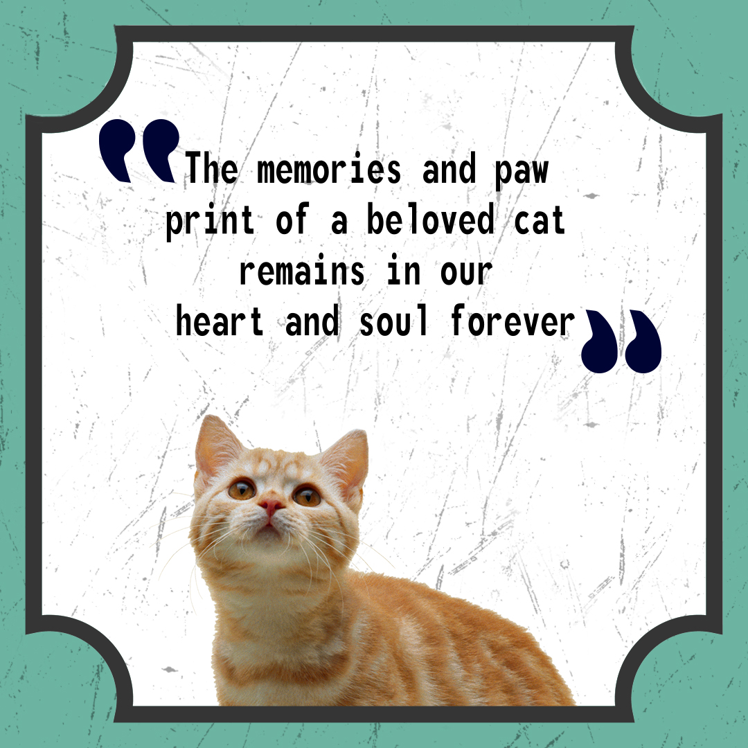"""""""The memories and paw print of a beloved cat remains in our heart and soul forever."""" #Dachshunds #HappyBirthdayBettyWhite #corpse #cat #catslover"""