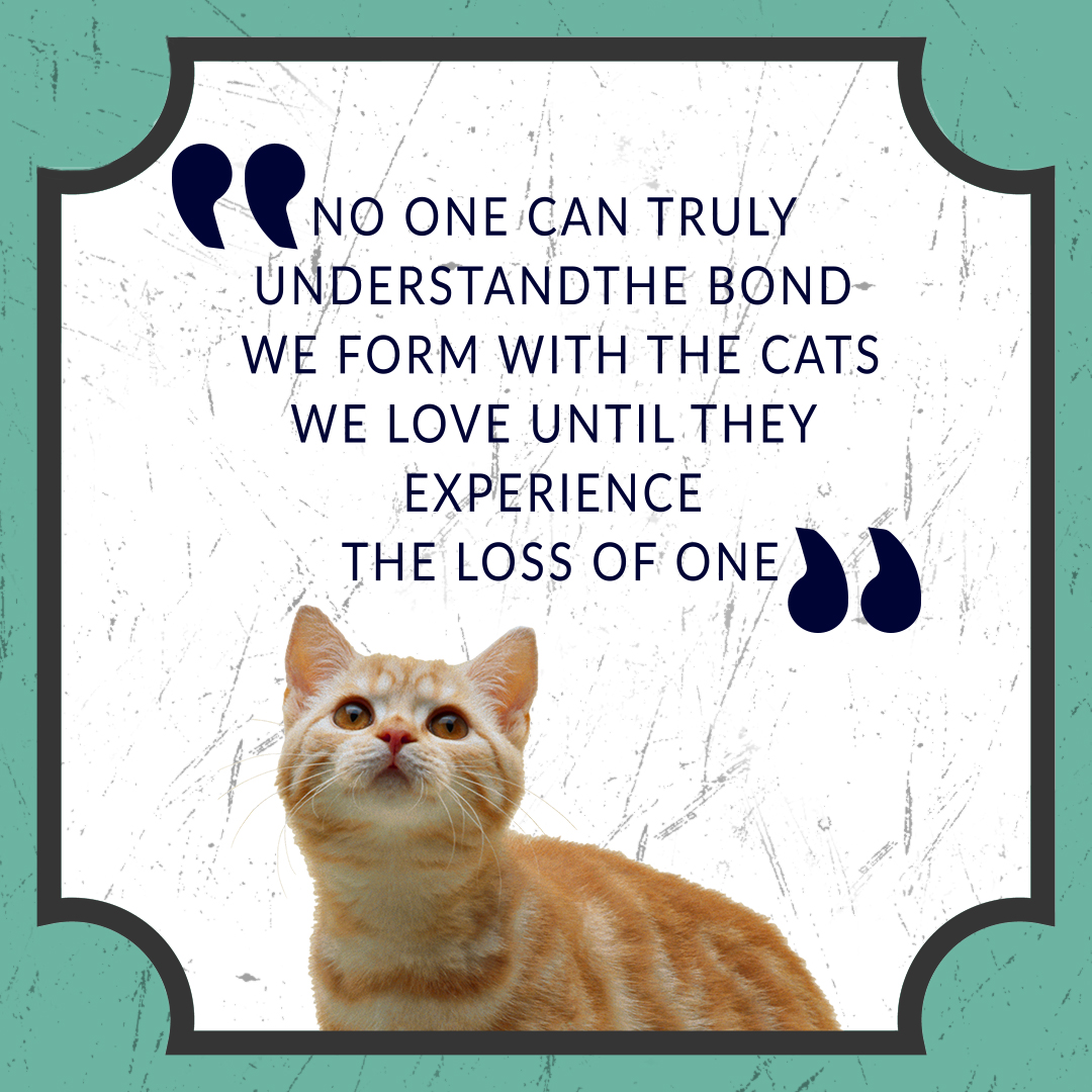 """No one can truly understand the bond we form with the cats we love until they experience the loss of one.""   #Dachshunds #HappyBirthdayBettyWhite #corpse #cat #catslover"