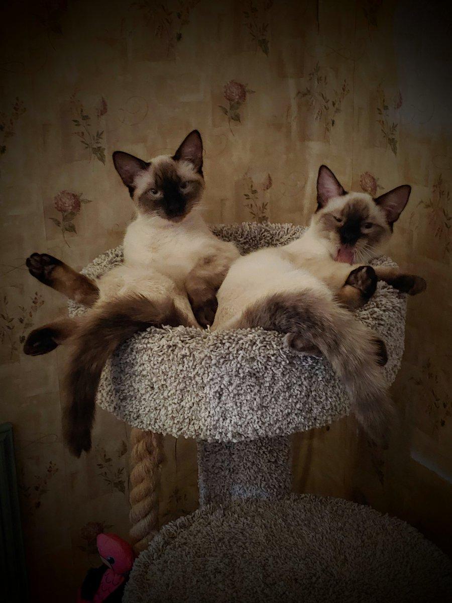 When you turn on the TV and hear her voice ... #Catsjudgingkellyanne #StellaMcD #PenelopeMcD  #CatsOfTwitter