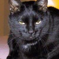 #catsjudgingkellyanne run