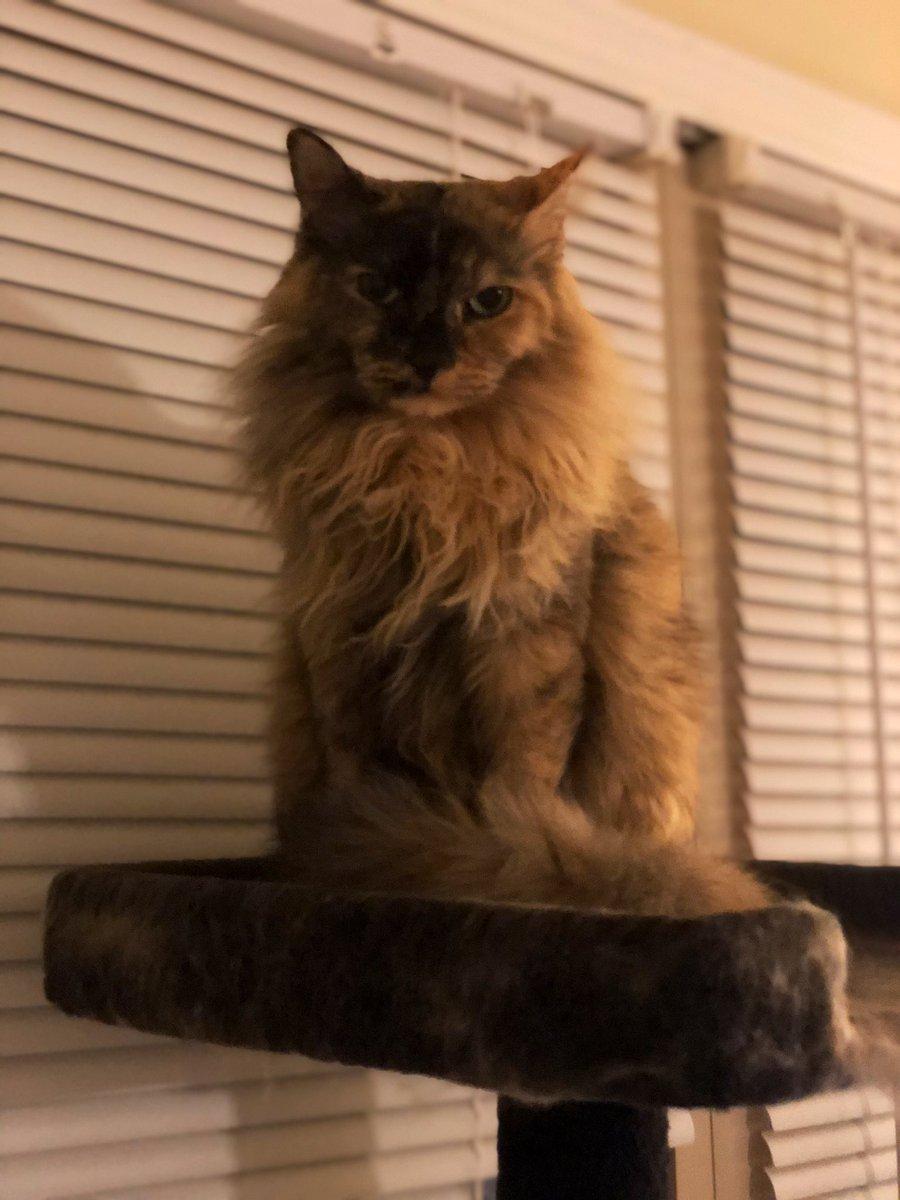 Evil Betty is really over her #catsjudgingkellyanne