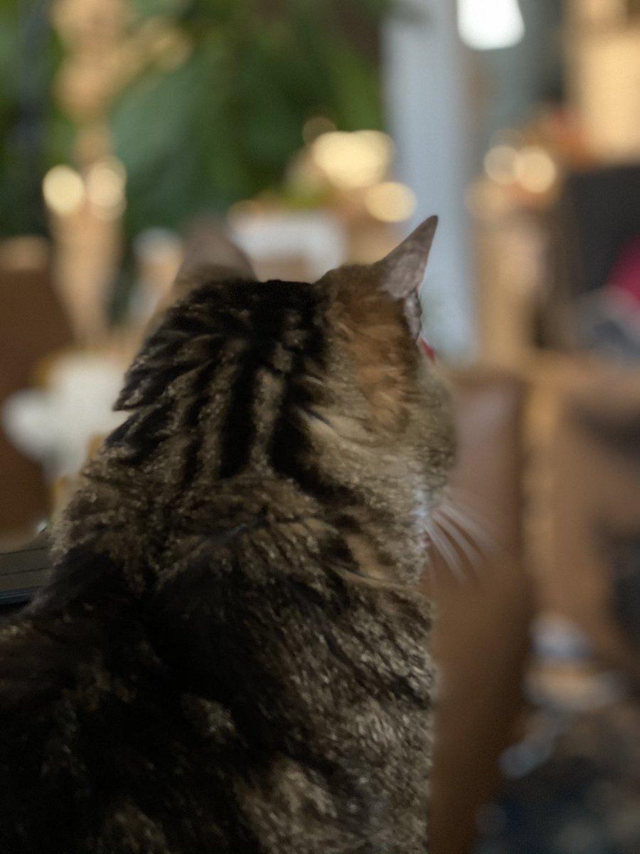 #Catsjudgingkellyanne I just .... I just can't