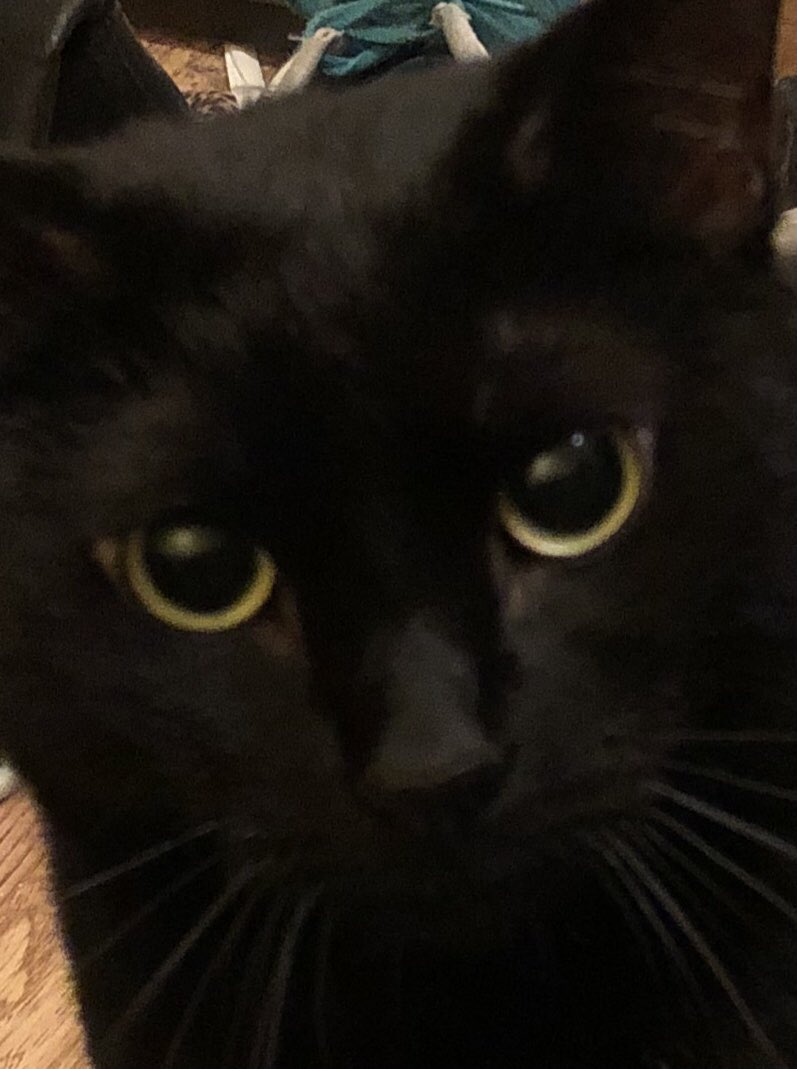 """#catsjudgingkellyanne """"seriously bitch?"""""""