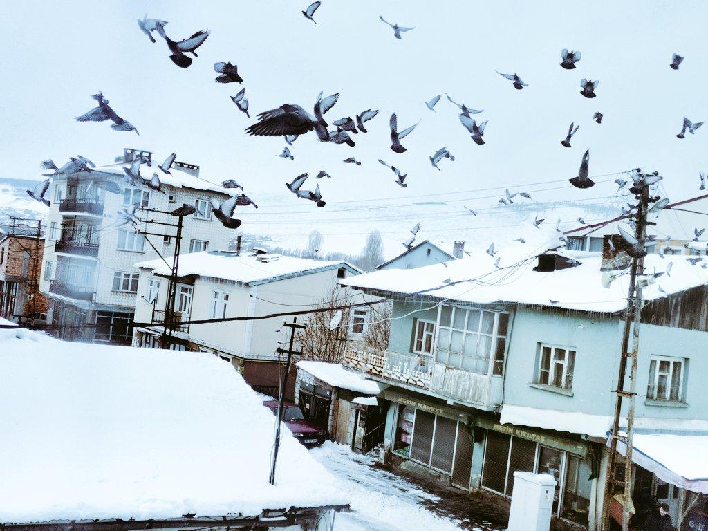Hayat kısa kuşlar uçuyor.. #pazar #Fotoğraf #karyağıyor