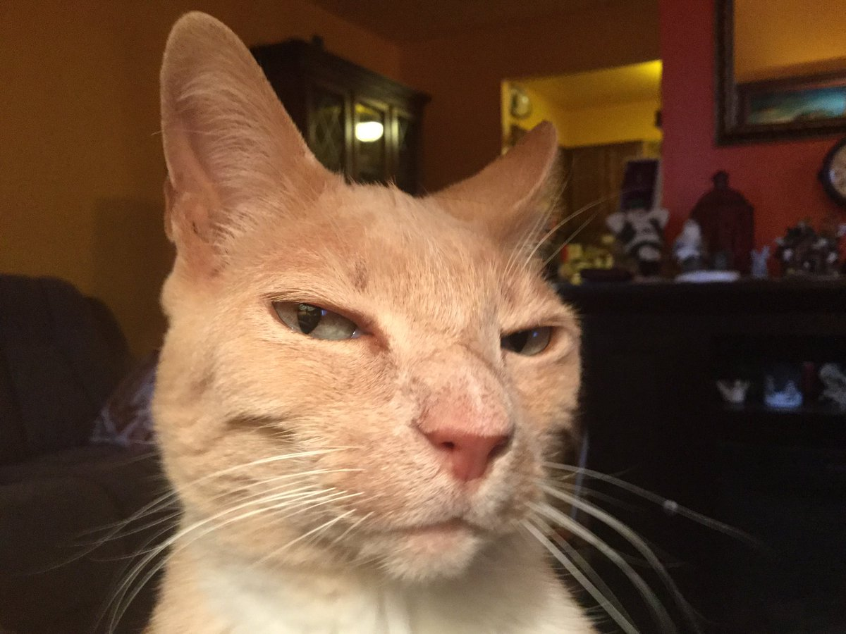 We are not amused #catsjudgingkellyanne