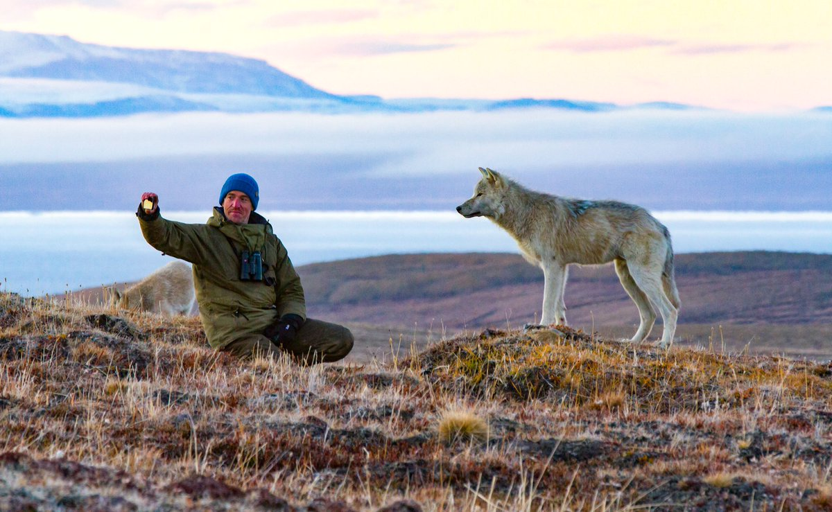 This is an Arctic Wolf we named Scruffy. We spent many joyous weeks in the company of his pack. That was back in 2014. Can't help wondering if he's still going strong. 📷 @mackieevans #wolf #animals #wildlife #arctic #wolves #selfie #wolfselfie https://t.co/1GeKnl38W0