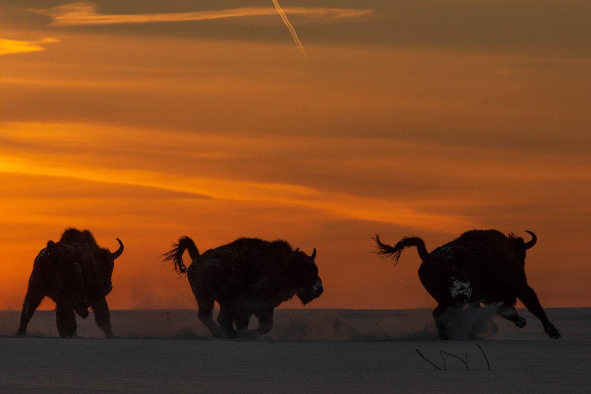 @BuffaloBills Picture by @Exen #BillsMafia