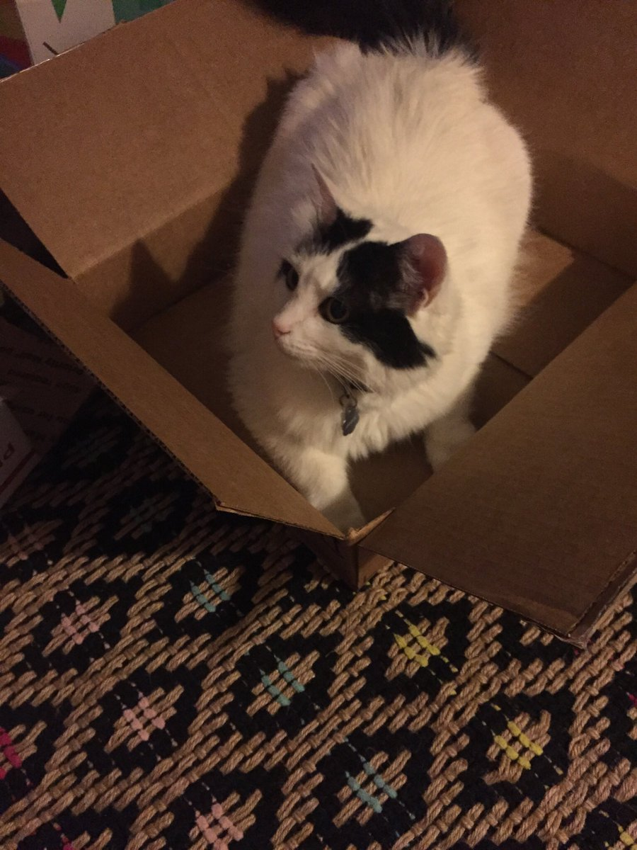 Angela in no way appreciates that #SwampHag kellyanne... she says #STFU  #catsjudgingkellyanne
