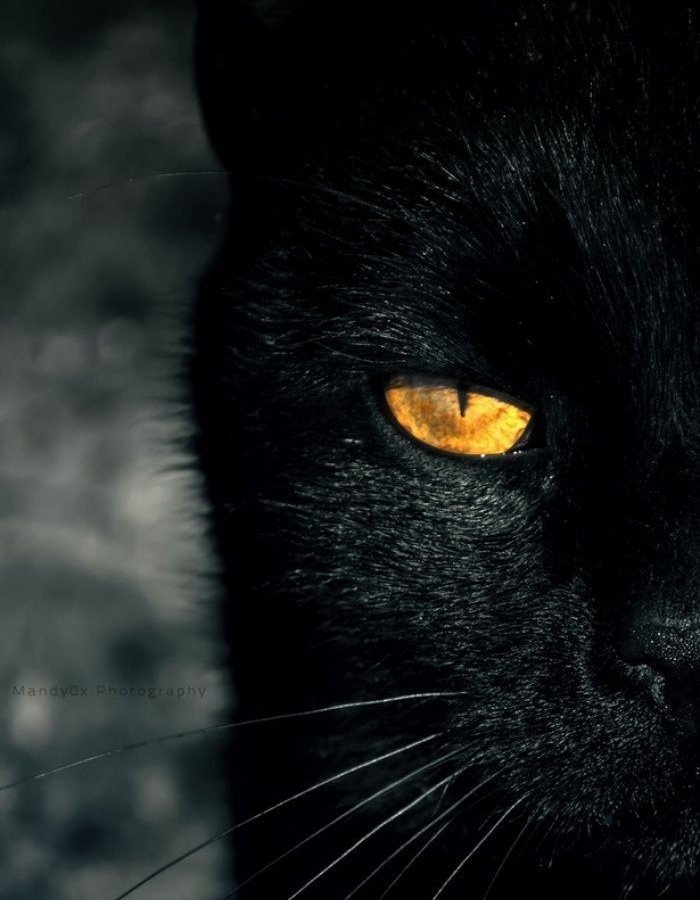 Seonghwa as black cat – a thread #SEONGHWA #ATEEZ @ATEEZofficial