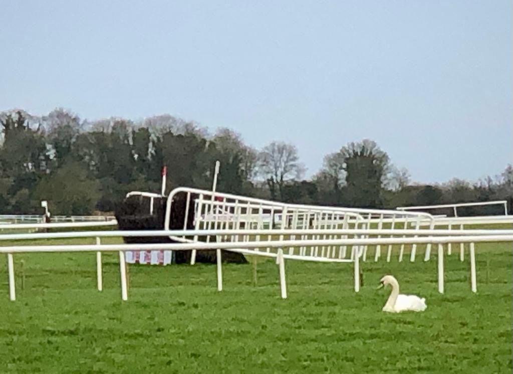 test Twitter Media - Best view in the house in @punchestownrace today https://t.co/JUvYV3jGX1