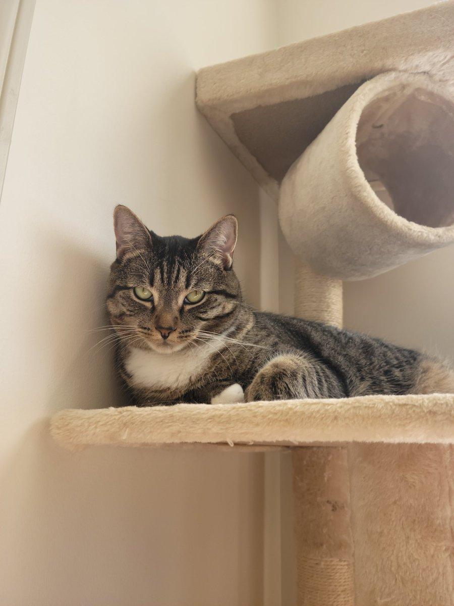 Lunas not happy about it, but then again is she ever happy? #catsjudgingkellyanne