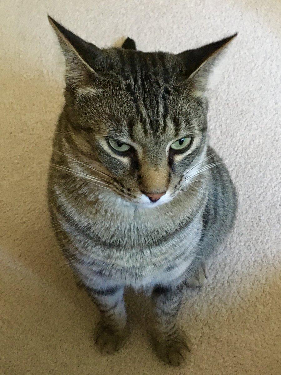 Gino never wants to hear her name again. #Catsjudgingkellyanne