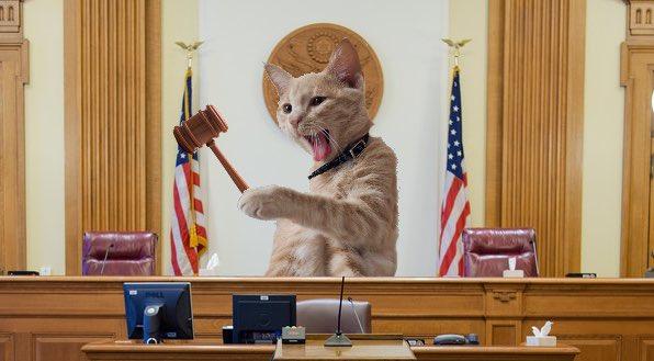 Guilty as sin!  #catsjudgingkellyanne