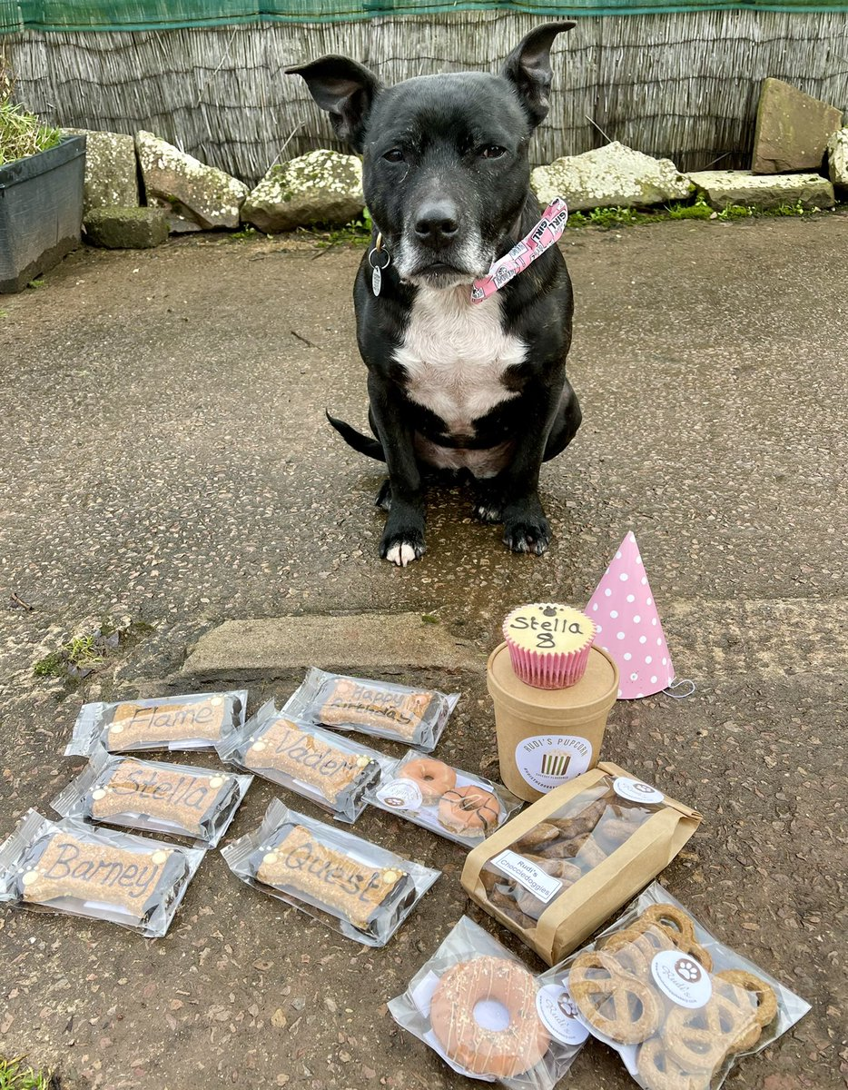 It's my #GotchaDay we celebrate my birthday today as we don't know my exact date of birth, we think I am 8 years old!  It was 7 years ago today mum brought me home from West Hatch @RSPCA_official to my forever home & job.   I love my birthday box mum bought me from @DoggyRudi  🐾