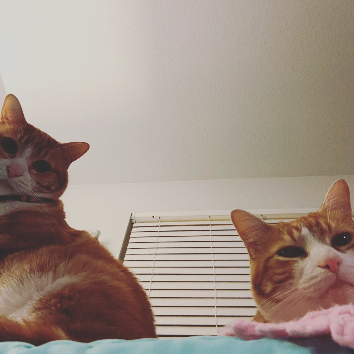 Archie and Popcorn are the least judgey cats ever, but even these two are #catsjudgingkellyanne.
