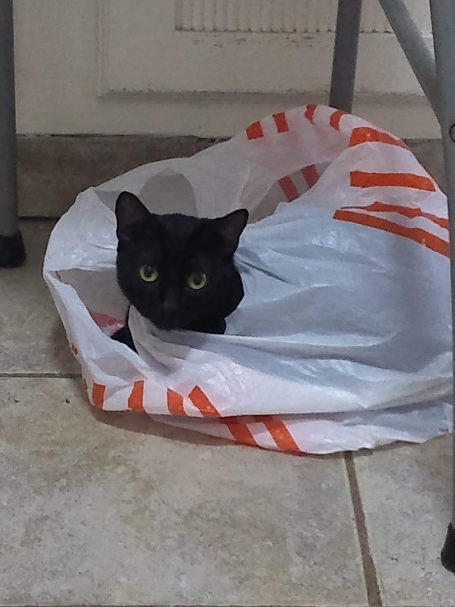 #Catsjudgingkellyanne This plastic bag makes more sense.