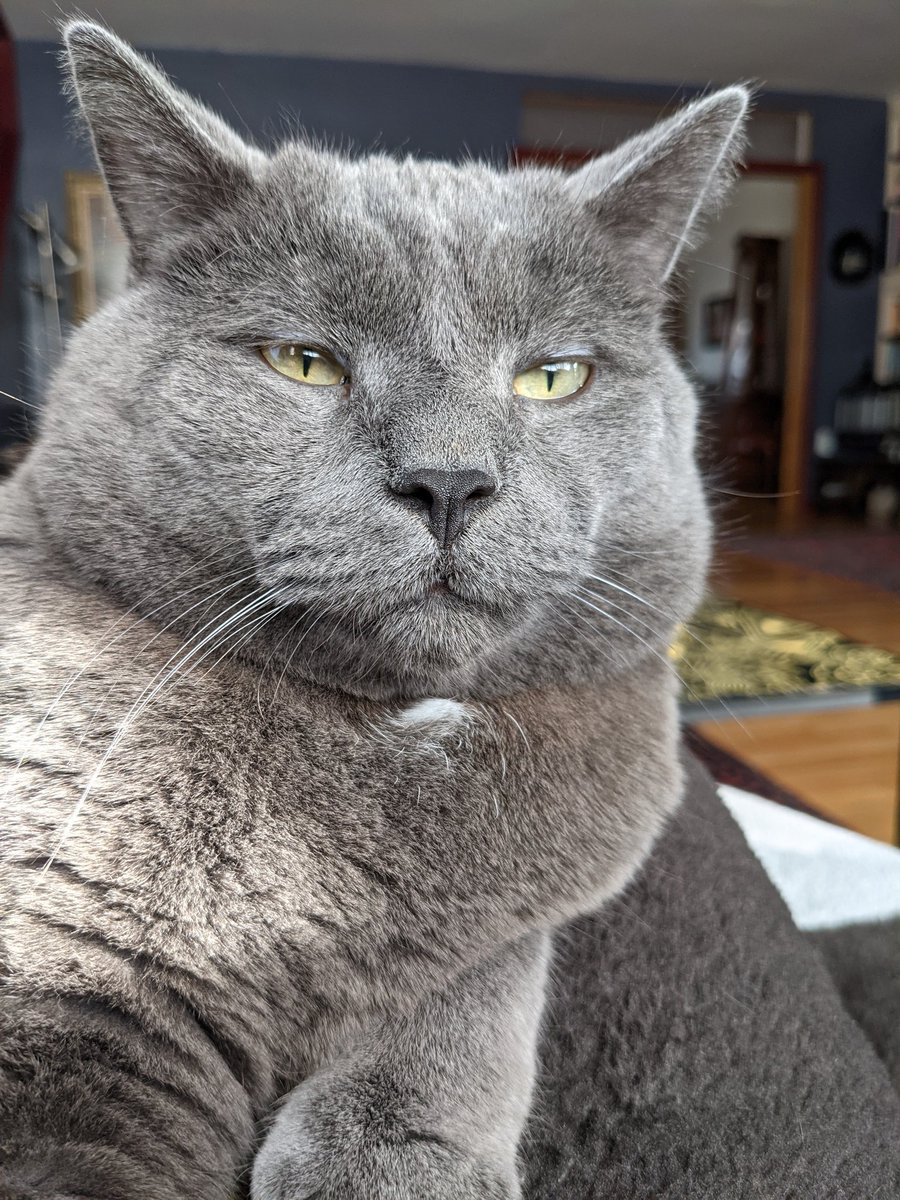 Bob. #catsjudgingkellyanne
