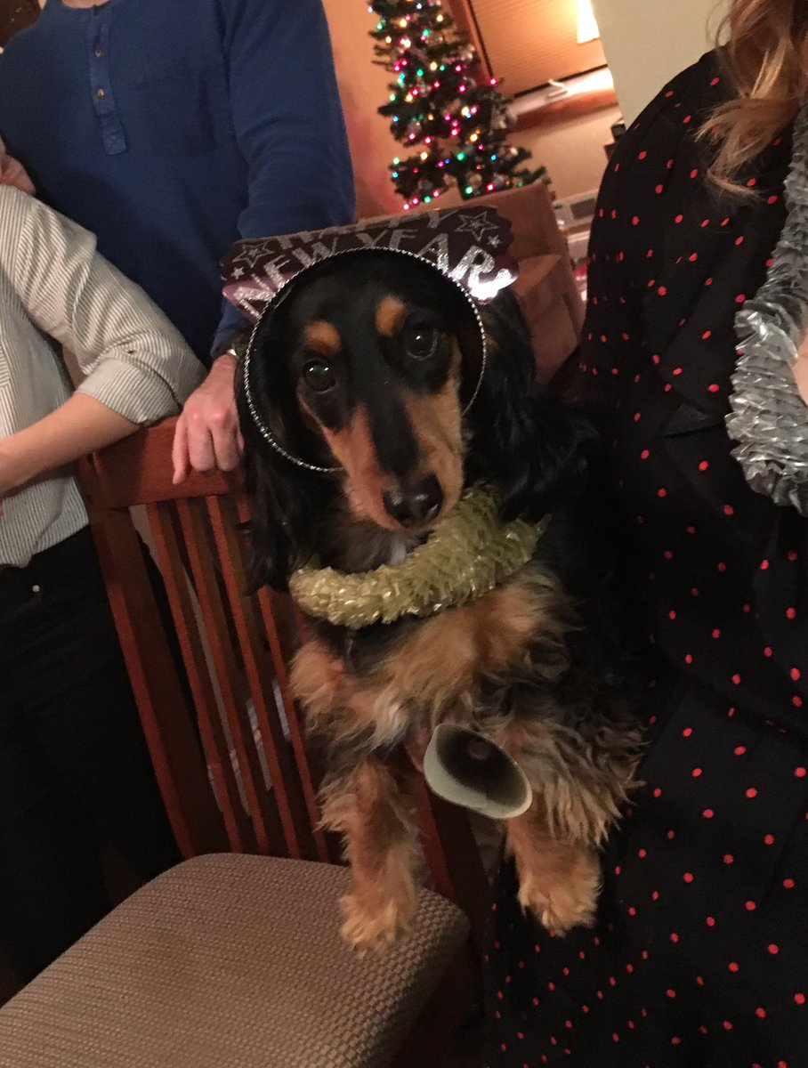 #Dachshunds meet Charlie, dramatic diva but the absolute best little guy!