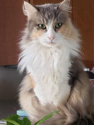"""Twinkle says  """"Kellyanne, pretty is as pretty does."""" #catsjudgingkellyanne"""