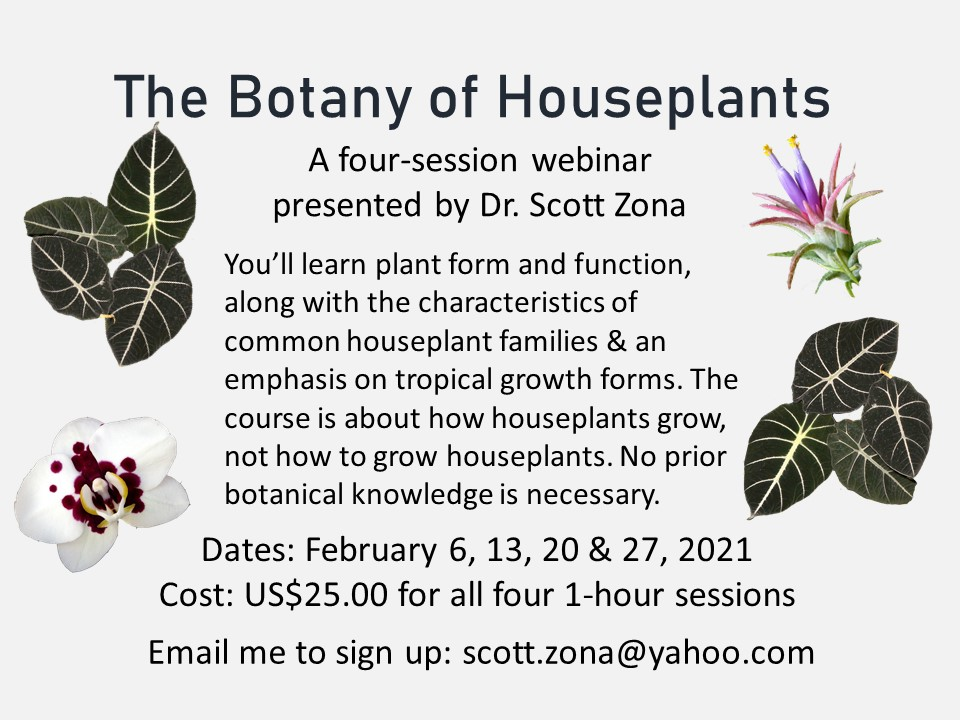 Scott taught me so much about plants in grad school! He's a pro!  This is a great opportunity for folks to learn more about those pretty plants found in your homes and offices! 🌿🤩