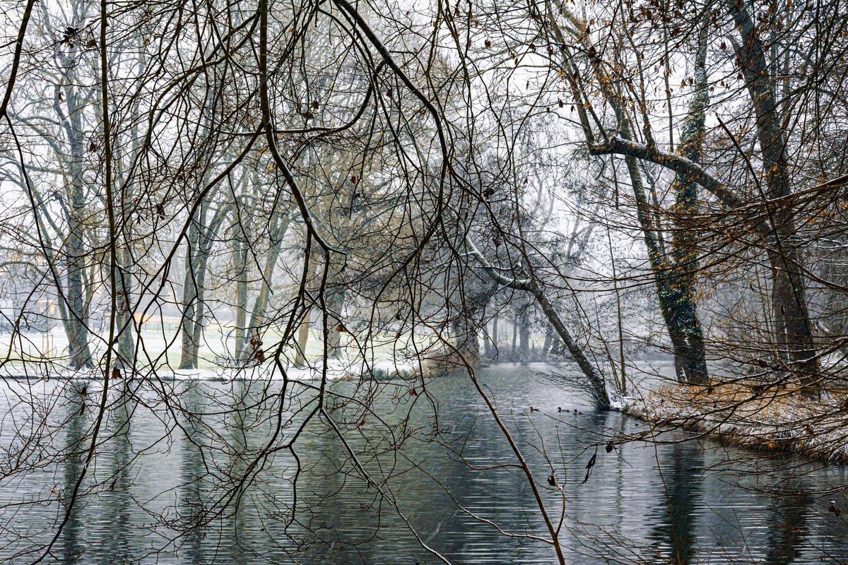 #nature #photography #naturephotography #love #travel #photooftheday #landscape #naturelovers #beautiful #picoftheday #photo #nikon #wildlife #winter #snowday #tree #winteriscoming #snow  #naturelover #seineetmarne #photographer #nikonphotography