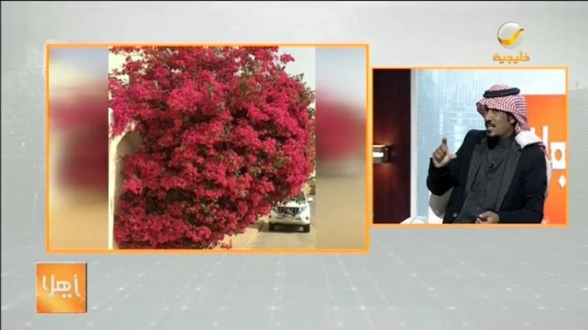 عبيد العوني -مهتم بالبيئة- يستعرض أشهر أنواع الأشجار التي تُزرع في المنازل  #برنامج_ياهلا #روتانا_خليجية