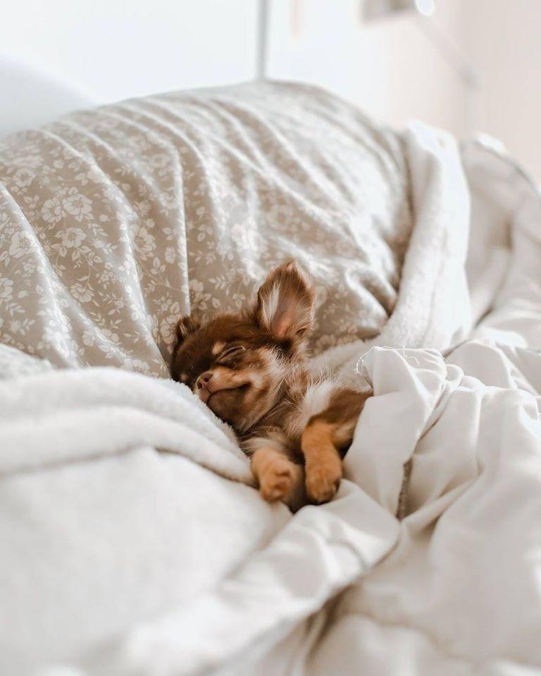 The only way I want to spend my Sunday! How about you?  #majestys #majestysanimalnutrition #dogs #dogsofinstagram #dogstagram #puppylove #ilovemydog #dogsarefamily #doglife #sundaymorning #sundayvibes