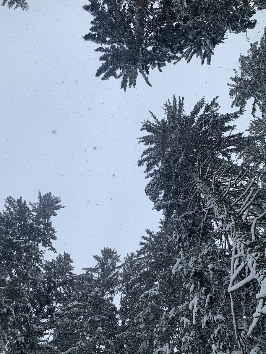 Winter wonderland 🌨🤍  Stunning walk through the fairytale landscape of the Franches-Montagnes in the Jura🐴  It didn't stop snowing the whole day while crossing prairies and wondering at all the magical snowy trees  @Jura3Lacs #WinterWonderland https://t.co/uBD64I92jx