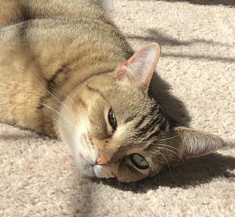 Evie had reached her limit with her even before Nov 2016 #catsjudgingkellyanne