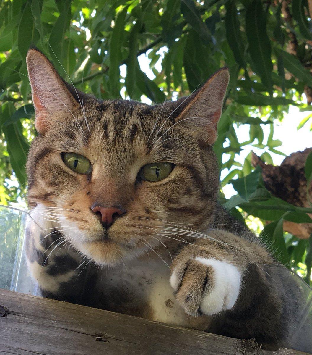Cairo judges hard #catsjudgingkellyanne