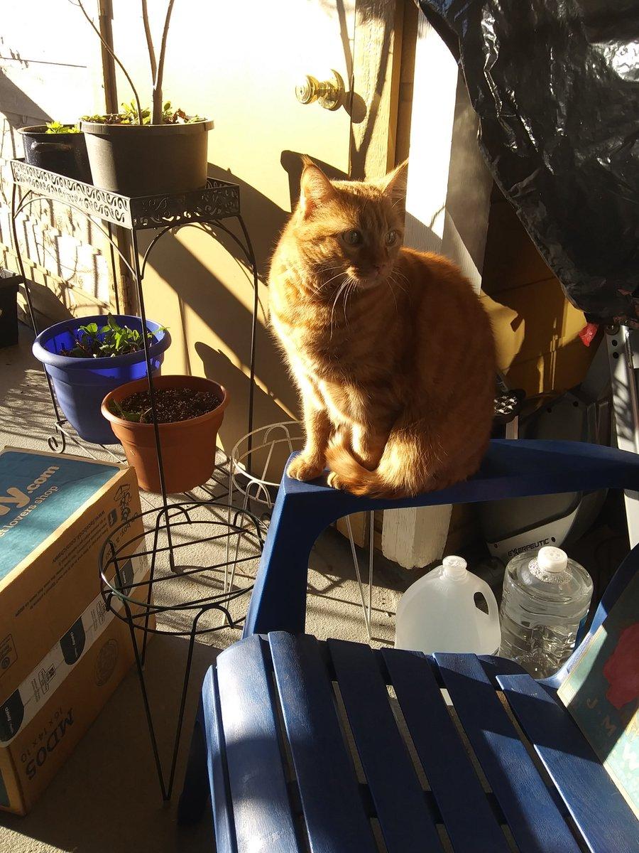 Ugh, don't ruin my morning.  #Catsjudgingkellyanne  #CatsOfTwitter