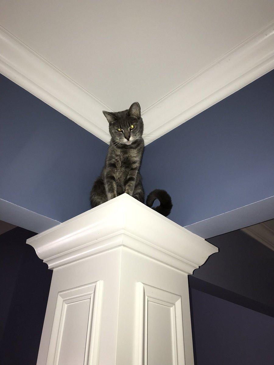 @ShawnCasey2 #catsjudgingkellyanne  Jasper condemns from on high