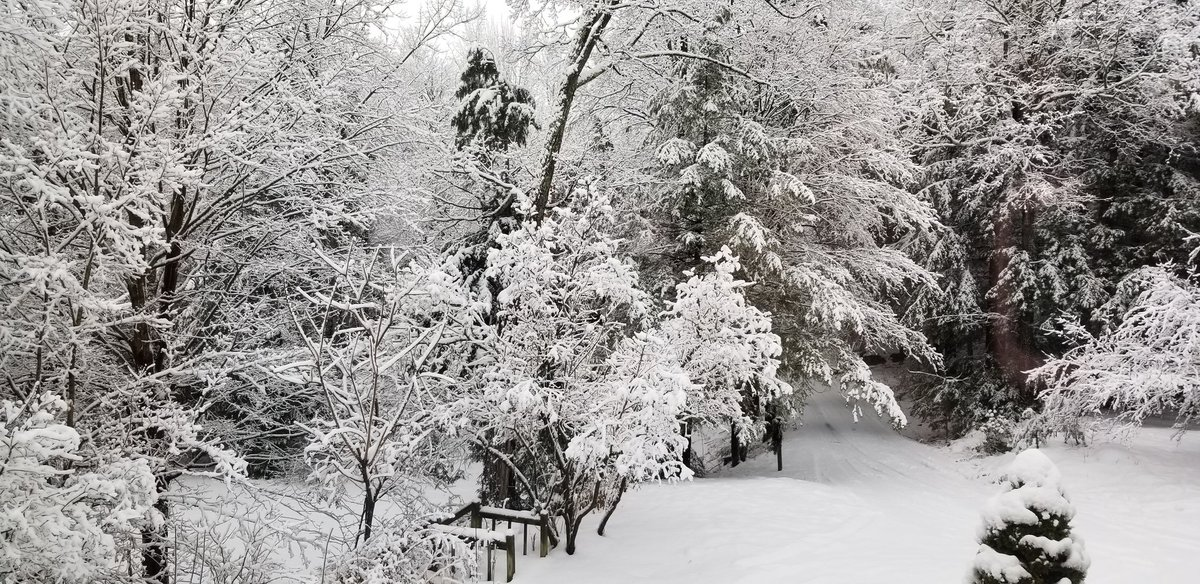 Good morning everyone happy Sunday ❤🥰🙏 beautiful heavy snow to wake up to. Have a super safe fun warm day no matter what you are doing ❤❤❤😘 #NaturePhotography #nature #naturelovers #snow #beautiful #trees #vermont #NewEngland #WINTER #GoodMorningTwitterWorld #SundayMorning