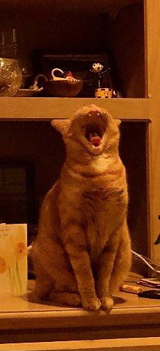 #catsjudgingkellyanne - This was election night