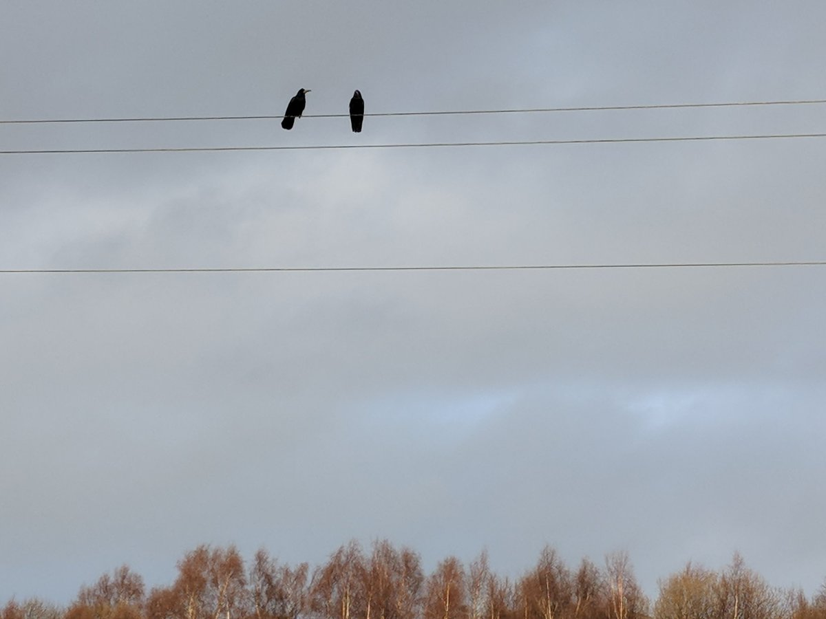 #Lockdown2021 #day13 Twosome on a wire