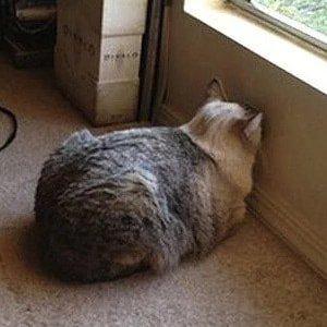 #CatsJudgingKellyanne   ¡Ya basta!😼