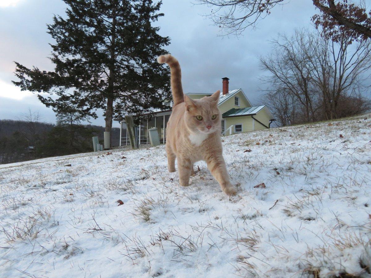 Tony, a #cats #catsoftwitter #weathercat reports 32F (0C) @ThePhotoHour @MiriWeather & @chesterlampkin in #WashingtonDC. Come @hbwx #mountains Basye, #Virginia calls @WHSV_StephanieP & @WHSVBen @WHSVnews. We're #skiing @BryceResort #SundayMorning A #photooftheday @BobVanDillen!